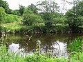 Camowen River, Omagh - geograph.org.uk - 1394960.jpg
