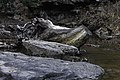 Camp Creek State Park - Marsh Fork Falls WV 5 LR.jpg