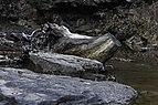 Camp Creek State Park - Marsh Fork Falls WV 5 LR.jpg