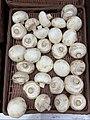 Carrefour Market (Rillieux-la-Pape) - des champignons de Paris.jpg