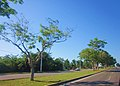 Casi saliendo de Chetumal 2. - panoramio.jpg