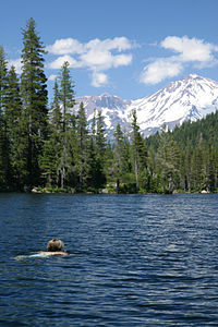 Castle Lake (California) - swimmer with Mt. Shasta (332269890).jpg