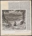 Castor fiber - 1862 - Print - Iconographia Zoologica - Special Collections University of Amsterdam - UBA01 IZ20400211.tif