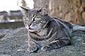Cat in Corte 1.jpg