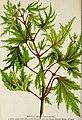 Catalogue of Andorra Nurseries - choice hardy trees, shrubs, plants, roses, and fruit (1893) (20389833560).jpg