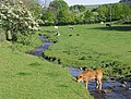 Cattle in pasture near Northburn Farm - geograph.org.uk - 451219.jpg