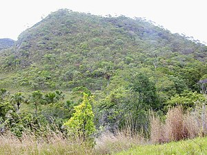 Cerrado - Cerrado vegetation of Brazil.
