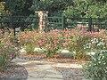 Chamblee Rose Garden, Tyler, TX IMG 0450.JPG