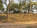 Chandraketugarh Mound - Berachampa 2012-02-24 2509.JPG