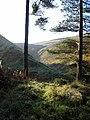 Changue Forest - geograph.org.uk - 263349.jpg