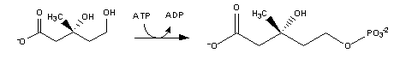 Cholesterol-Synthesis-Reaction3.png