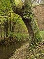 Choteč, Kalinův mlýn, strom a potok.JPG