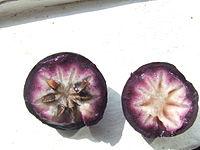 Chrysophyllum cainito0.jpg