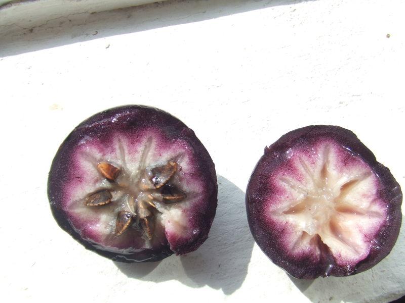 File:Chrysophyllum cainito0.jpg