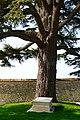Cimetière de la ville-haute, Provins - Grave of Jules-César Savigny 02.JPG