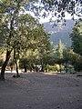 Cipreses (Ranchillo). - panoramio (9).jpg