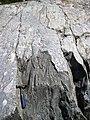 Clast-poor mixtite (Coleman Member, Gowganda Formation, Paleoproterozoic, ~2.3 Ga; Percival Lake roadcut, Ontario, Canada) 8 (32779956097).jpg