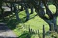 Coed Madryn Trees - geograph.org.uk - 555262.jpg