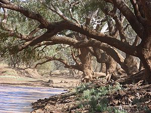 "Waltzing Matilda - The Combo Waterhole, thought to be the location of the story that inspired ""Waltzing Matilda"""
