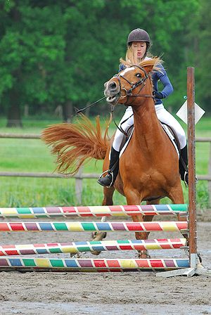 Refusal (horse) - A horse running out to the left to avoid jumping the obstacle.