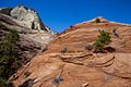 Conflicting landscape in the eastern side of Zion (8078516553).jpg