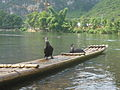 Cormorant fishing -Yangshuo -China -24July2007.jpg