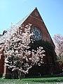 Cornell sage chapel blossoms.jpg