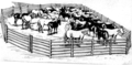 Corral (PSF).png