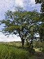 Costa Rica (6109647947).jpg