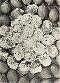 Cottony rot of lemons in California (1916) (14764390164).jpg