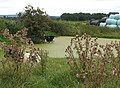 Cows in the pond - geograph.org.uk - 541460.jpg