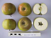 Cross section of Budai Ignac, National Fruit Collection (acc. 1948-345).jpg