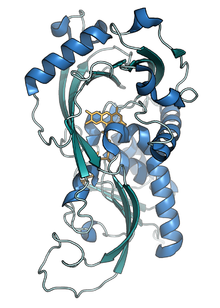 Crystal structure of RgDAAO (PDB code 1c0p).png
