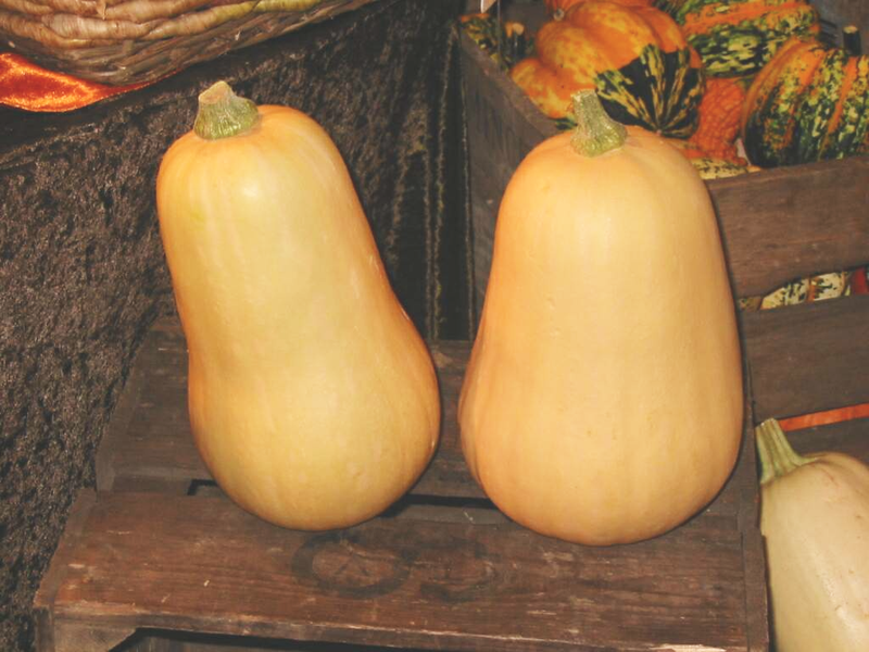 Wikipedia: Winter Squash