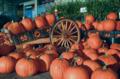 Cucurbita pepo Halloween Pumpkins for sale.png
