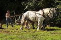 Débardage JEAN BAPTISTE RICARD mondial du cheval percheron 2011Cl J Weber08 (23715684989).jpg