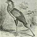 Dansk ornithologisk forenings tidsskrift (1912) (20827676382).jpg