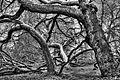 Das Refugium von Skogman und Skogsfru ---- Insel Mainau, Bodensee (8182167483).jpg