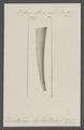 Dentalium elephantinum - - Print - Iconographia Zoologica - Special Collections University of Amsterdam - UBAINV0274 081 10 0044.tif