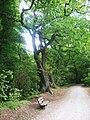 Der Weg - panoramio (1).jpg
