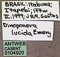 Dinoponera lucida casent0104920 label 1.jpg