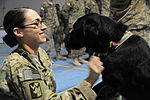 Dog Departs, helped countless troops 130201-A-TD077-008.jpg