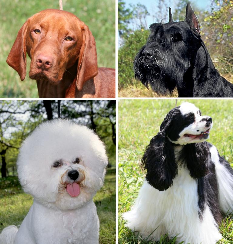 Dog coat variation