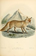 Dogs, jackals, wolves, and foxes- a monograph of the Canidae. With woodcuts, and 45 coloured plates drawn from nature by J.G. Keulemans and hand-coloured (1890) (20989202015).jpg