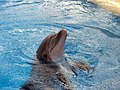 Dolphin Training (7980963506).jpg