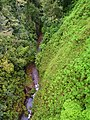 Dominica, Karibik - Trois Pitons National Park - View from the Suspension Bridge - panoramio.jpg