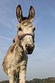 Donkey 0001.jpg