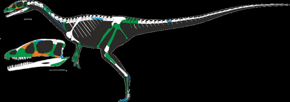 Dracoraptor