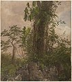 Drawing, Fig Tree and Wild Philodendron, 1865 (CH 18197813).jpg