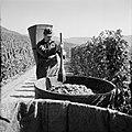 Druivendrager met stamper bij een kuip met druiven, Bestanddeelnr 254-4172.jpg